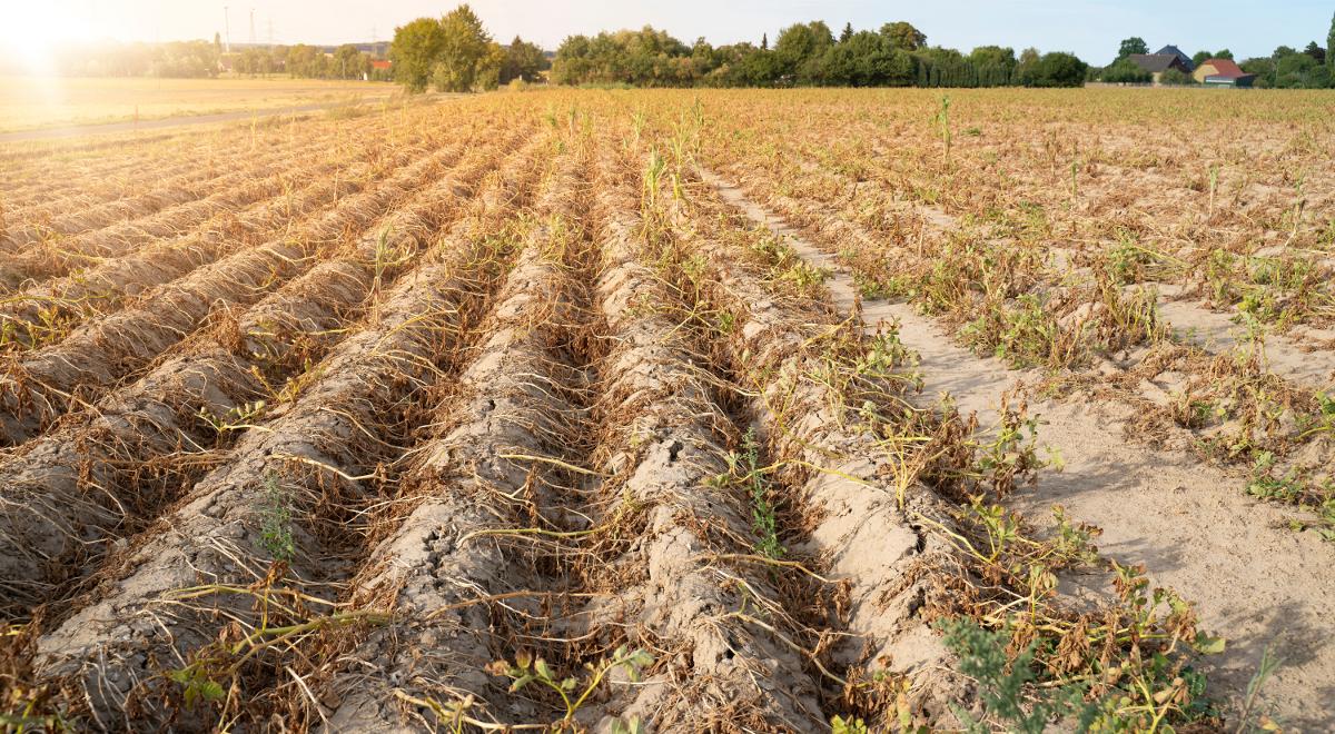 Szacowanie strat spowodowanych suszą – aplikacja