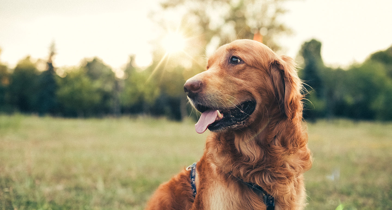 Opłata od posiadania psa – konsultacje społeczne
